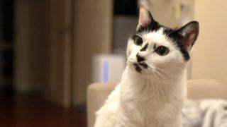 猫と暮らす メリット