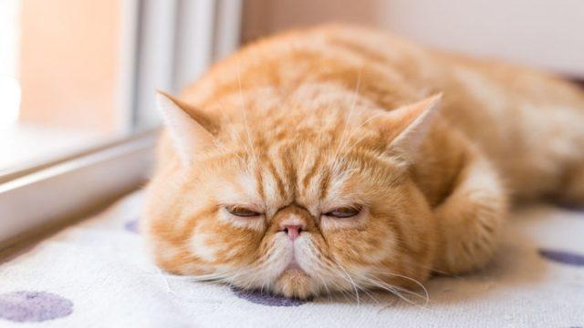 一覧 猫 の 種類